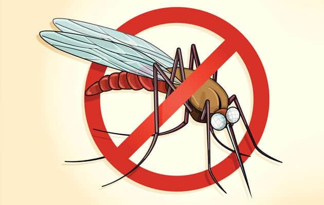 mosquito-malaria-transmite