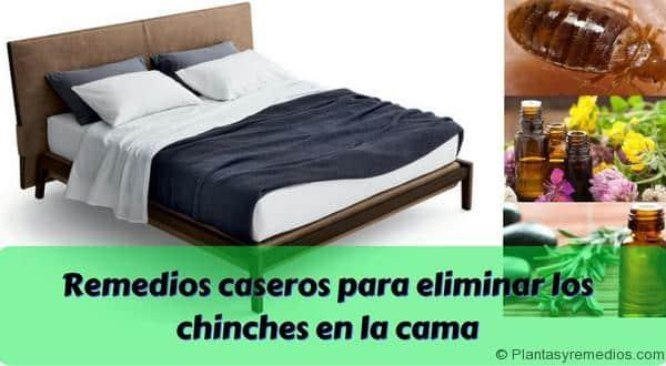 Remedios caseros para eliminar los chinches en la cama