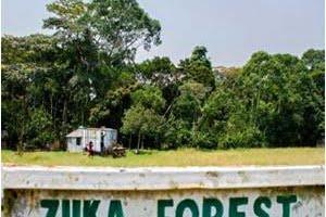 Ministerio de Salud Indonesia anuncia primer caso de zika