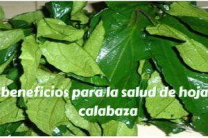 10 beneficios para la salud de hojas de calabaza