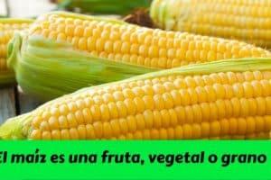 ¿ El maíz es una fruta, vegetal o grano -
