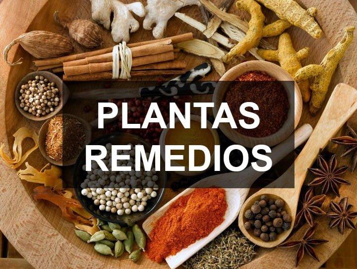 plantas remedios