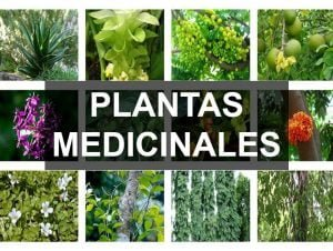 Artículos sobre plantas medicinales